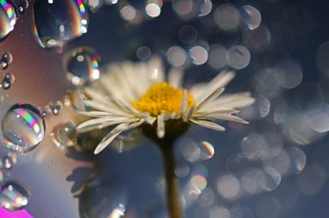 Author: Neal Fowler Author URL: https://www.flickr.com/people/31878512@N06/ Title: Crazy Daisy. Year: 2009 Source: Flickr Source URL: https://www.flickr.com License: Creative Commons Attribution License License Url: https://creativecommons.org/licenses/by/2.0/ License Shorthand: CC-BY